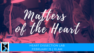 Heart Dissection Lab February 15