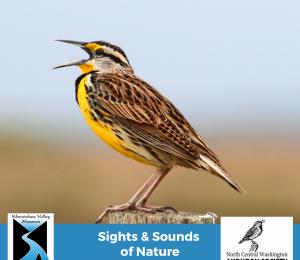 Songbirds Sampler